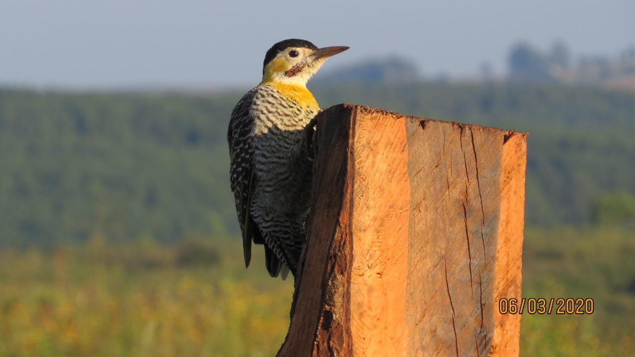 Aves e sua importância no funcionamento dos ecossistemas