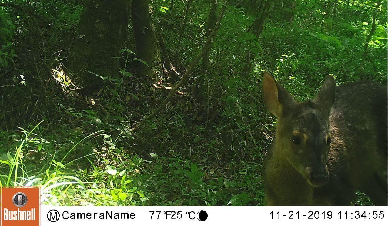 Câmera trap como monitoramento de áreas de interesse biológico