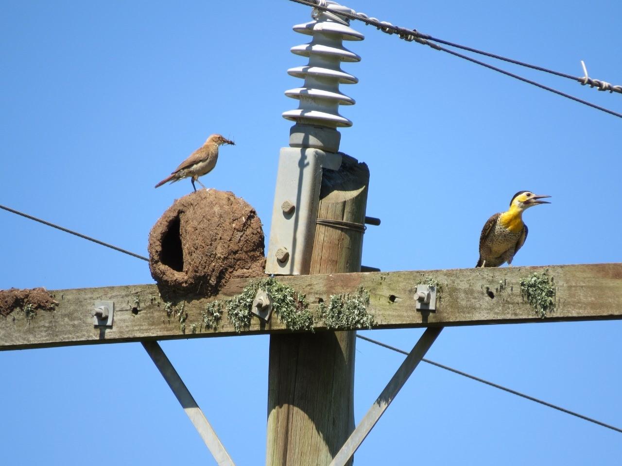 Impactos Ambientais das Linhas de Transmissão sobre a Avifauna